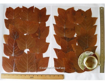 Set 2 plant plastic placemats Wabi sabi accent Real dried brown leaves inside handmade lamitated place mat Housewarming gift for couple