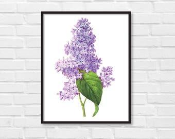 Floral Print / Botanical Print / Floral Clipart / Vintage Flower Illustration Print / DIY / Lilac Print / Floral Print / Art Print [23]