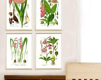 Crokus iris lily flowers print Plant print Botanical illustration print nature art wall art decor home decor SET OF 4 8x12 12x16 12x18