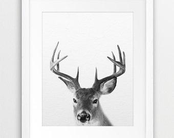 Deer Print, Deer Photography Black And White, Woodlands Animal, Antlers Print, Modern Wall Art, Nursery Wall Art, Home Decor, Printable Art
