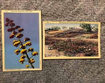 Vintage Arizona Flowers postcards
