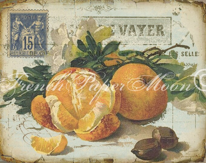 Digital Vintage French Oranges Printable, Vintage Oranges Digital Download, French Graphics with Botanical Oranges, Kitchen Print