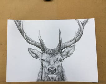 Stag drawing in graphite
