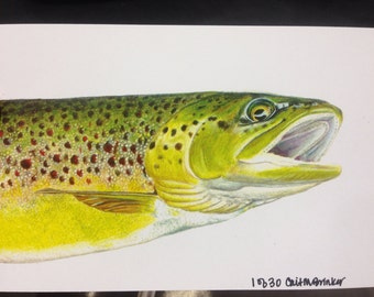 """MINI 4x6"""" Brown trout Print limited edition"""