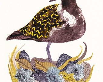 Plover with Nest - Archival Print