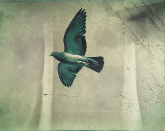 pigeon flight print