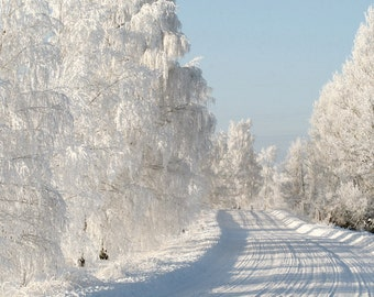 Fine art photography print, nature photography. Winter Road. Latvia. (8 x 12)