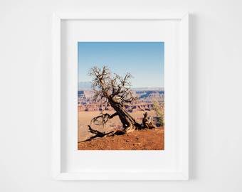 Utah desert photograph - Desert wall art - Large wall decor- Landscape print - Nature photo print - Framed art- Earth tones decor- Red rocks