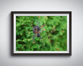 Instant Download Digital File Of Spider. Wall Art, Photo Prints, Photo Gifts. Printable File.