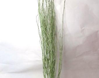 Birch Twigs, Natural Twigs, Birch Branches Centerpieces, Decorative Birch Twigs, Rustic Twigs, Wood Twigs, Woodland Wedding, Beech Twigs