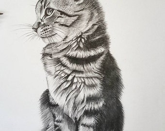 The Cat Pencil Sketch, Kitten, Side Purrfile