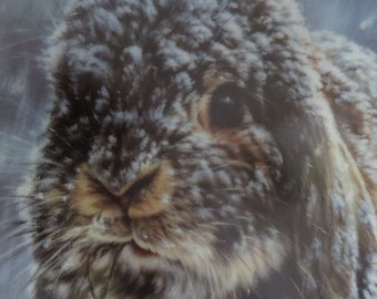 Snow Bunny, limited edition rabbit collectors plate