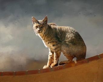 Bobcat on Adobe Wall in Tucson, Arizona