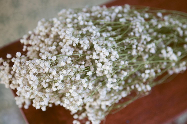 Dried Babys Breath Bunch Babys Breath White Flower Filler Dried