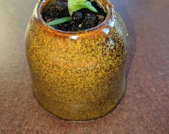 Gold fleck glaze succulent planter