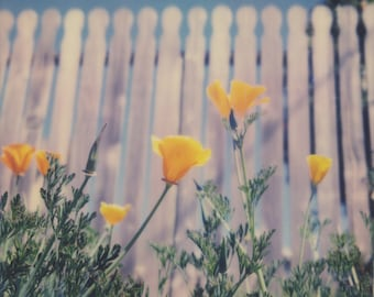 California Poppies | Polaroid Print | Flowers | Fine Art Photography