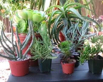 Landscape Special Drought Tolerant 7 Plants