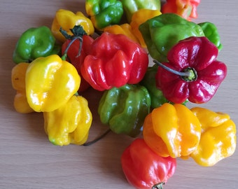 Whole Fresh Jamaican Scotch Bonnet Peppers  8oz or 1/2 lb  Caribbean  peppers. Tasty full of flavour fresh hot peppers.