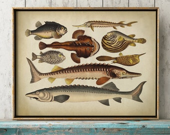 Fish print, fishes chart, fish poster, marine decor, beach home wall decor, marine creatures
