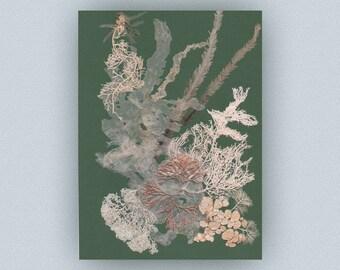 Seaweed art, Pressed seaweeds, Original Seaweed Artwork, 'Ocean Flowers'  Alganet seaweed pressings, beach cottage decor, coastal living art