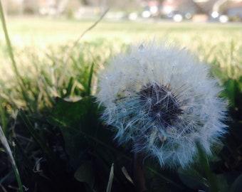 Make a Wish, Dandelion, Wall Decor, Digital Download
