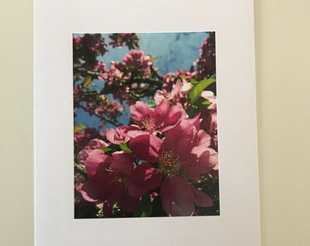 Pink Blossom Photo Card Blank