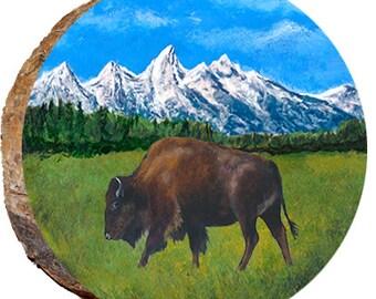 Tetons Buffalo Eating Dried Grass - DAU033