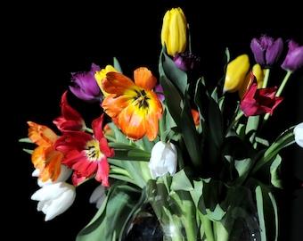 Bouquet of tulips multicolor - nature, macro, romantic decor - fine art canvas or paper print in sizes 8x12, 12x18, 18x24 or 24x36