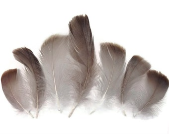 Natural feathers, Goose Feathers - Natural Goose Coquille Loose Feathers - 0.35 Oz : 3137