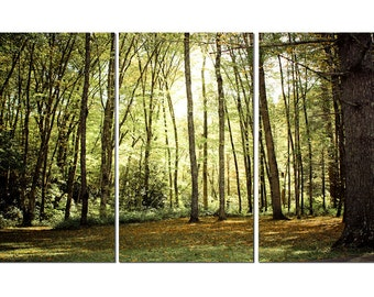 North Carolina Forest Canvas Triptych, 3 Panel Art, LARGE, Ready to Hang