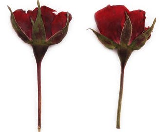 Pressed flowers, red rose buds 20pcs for floral art, craft, card making, scrapbooking, Valentines day