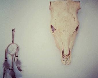 Southwestern Cow Skull