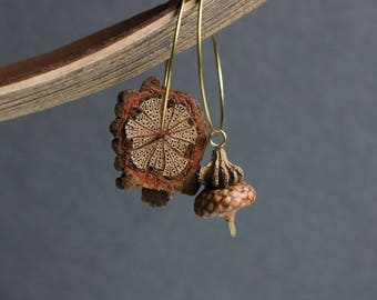 hammered brass hoops with real acorn and exotic wood - asymmetrical dangle earrings - earthy botanical jewelry