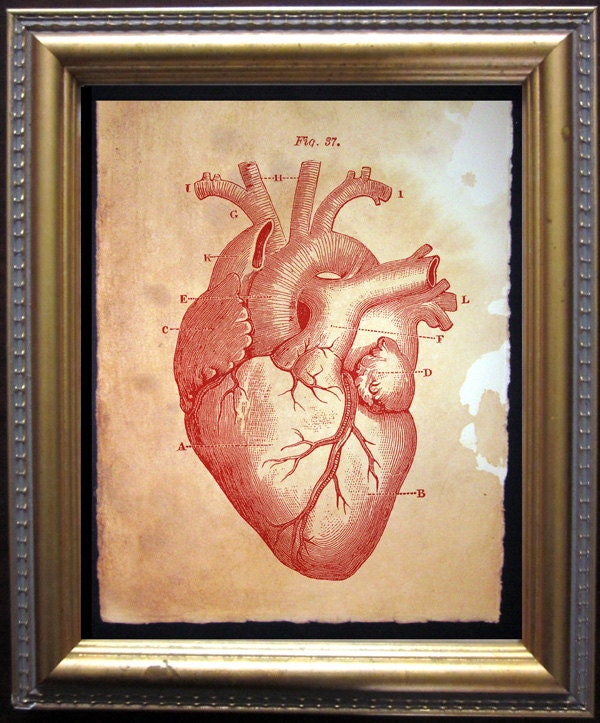 Heart Diagram Art Residential Electrical Symbols