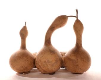 One (1) natural gourd rattle, gourd maraca