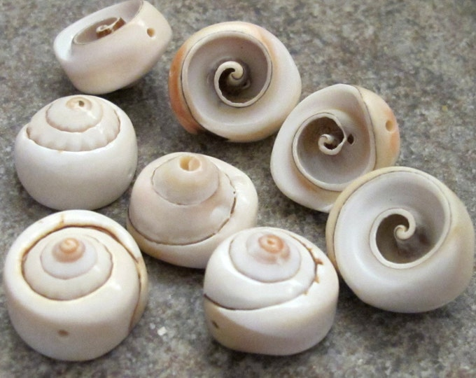 4 Beads-Natural Spiral cone shell nautilus beads -NB077