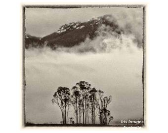 Trees & Misty Mountain GREETING CARD