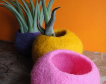 Felted Plant Pod Airplant Holder