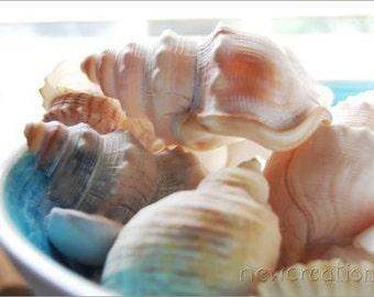 Beach house print sea shells photo beach theme beach house aqua photography seaside print beach wall art beach cottage photo interior decor