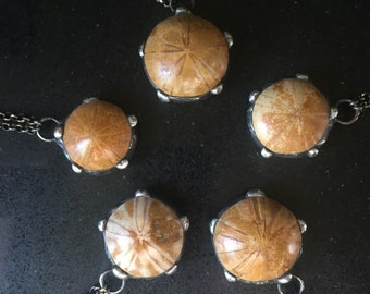 Small Fossilized Sand Dollar Necklace