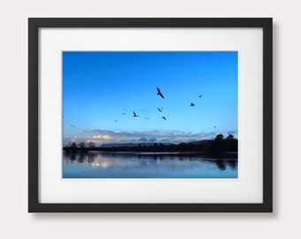 Birds in Flight, Doorley Park, Sligo Town, Co. Sligo, Ireland