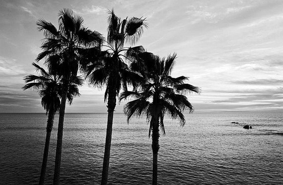 Black and white beach photography sunset wall art palm trees