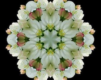 Flower Mandala Energy Art - Awakening in Your Spiritual Heart