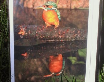 Kingfisher At Sunrise (Greeting Card)