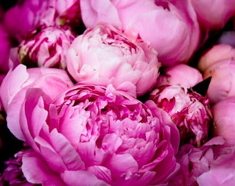 Nature Photograph, Fragrant Bright Pink Peonies, Summer in Southern France, French Wall Decor, Pink wall art, nature photo, office art