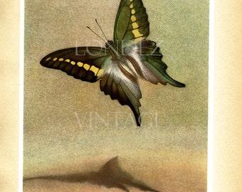1950 Vintage Butterfly art Vintage butterfly poster Butterfly print Vintage butterfly gift Butterfly decor Butterfly wall art Biology print