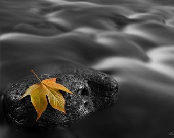 Photograph of an autumn leaf in West Clear Creek, Arizona, printed on metal and ready to hang