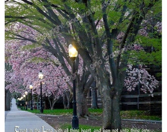Magnolia Path Inspirational Proverbs 3-5-6 Spring Trust in the Lord Christan Typography blossoms Princeton Landscape by Gina Waltersdorff