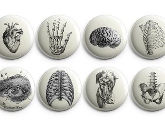 "Vintage anatomy buttons, Anatomy fridge magnets - 1.25"" buttons - coworker gift, vintage heart - B004"