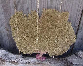 "Natural Dried Bahama Sea Fan Coral 8 10 12"" Small Med DIY Shadow Box Frames Coastal Home Decor Floral Arrangement Mermaid Crown Craft Supply"
